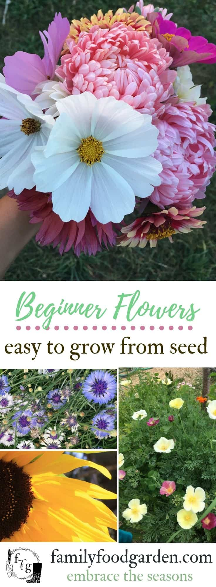 Easy beginner flowers to grow from seed