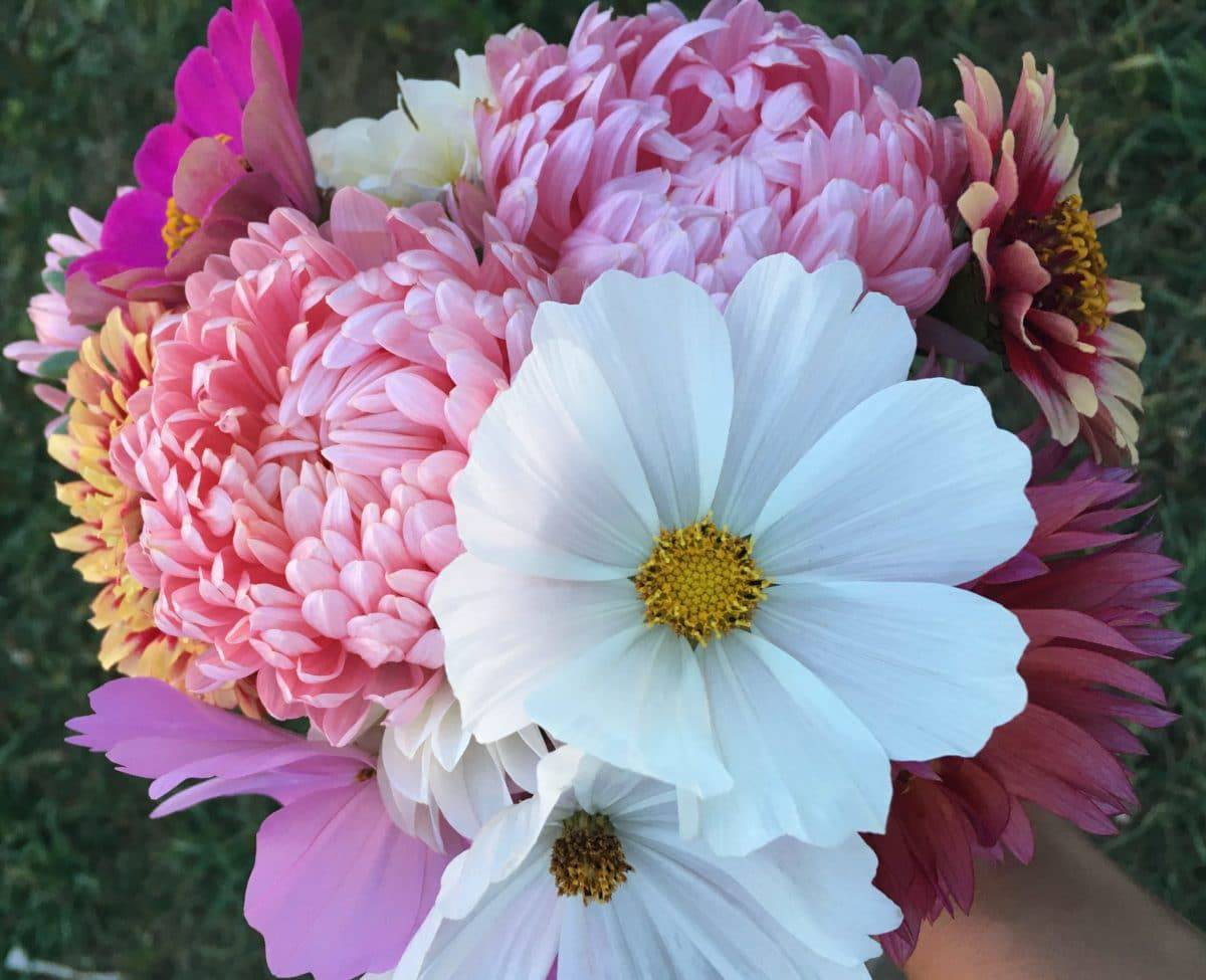 The easiest flowers to grow from seed means enjoying masses of blooms with little effort.