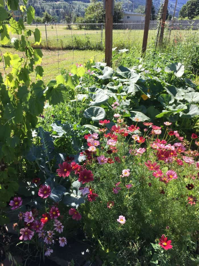 Beautiful and productive garden borders and edges