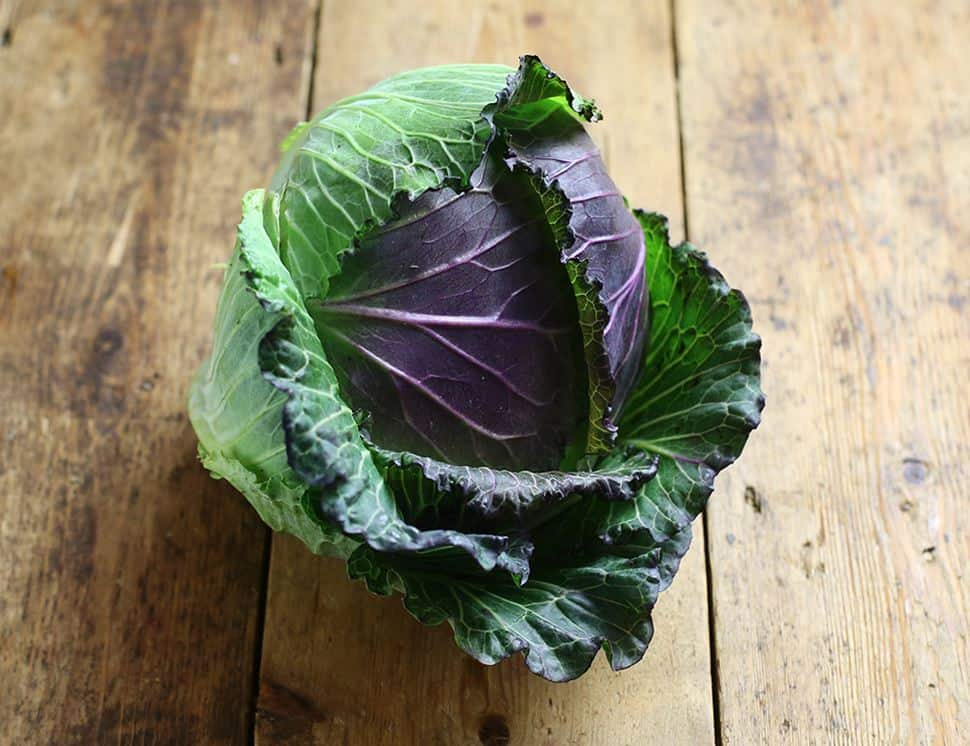 Stunning January King Cabbage