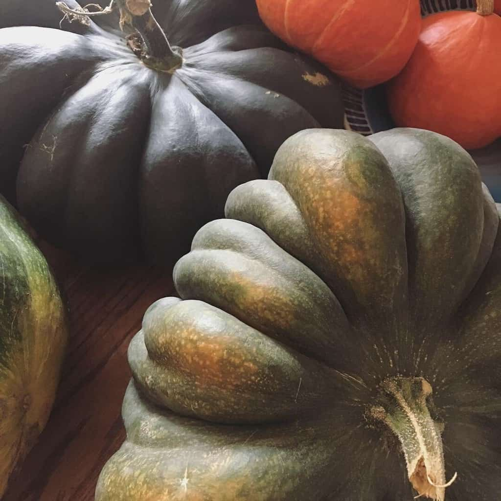 Musquee De Provence Heirloom Pumpkin