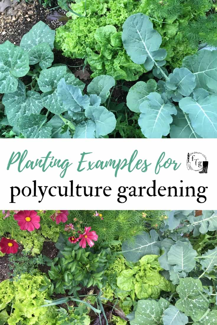 Polyculture gardening examples #permaculture #polyculture #permaculturegardening #permaculturedesign
