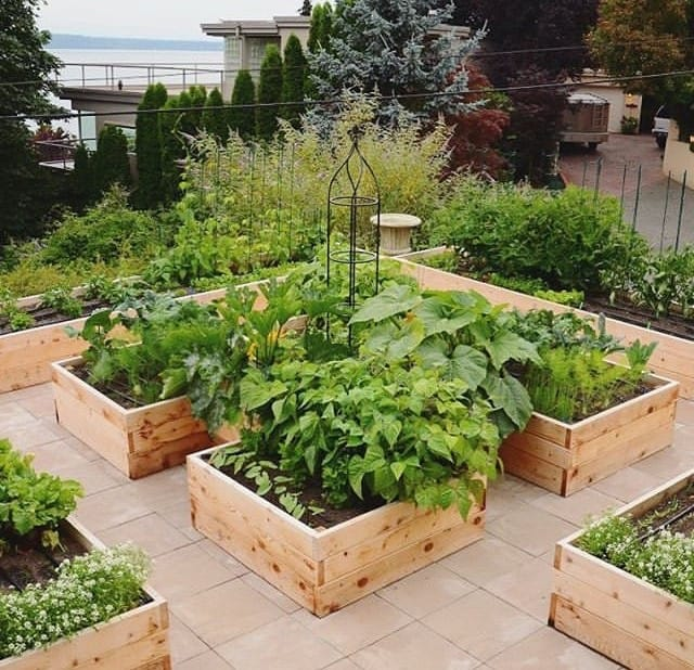 Stunning Rooftop vegetable garden