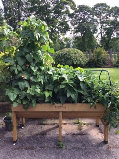 VegTrug planters are great for small urban gardens