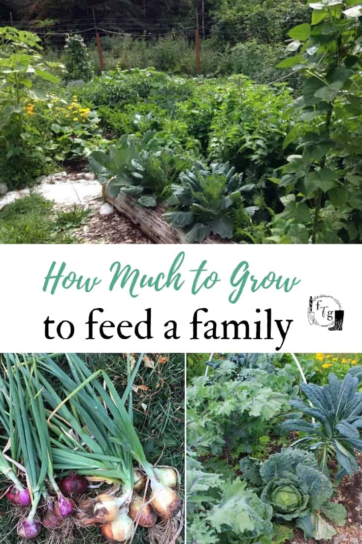 What size garden to feed family of 4