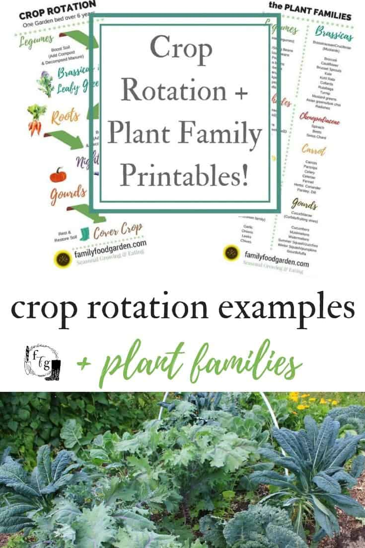 Crop rotation examples for the home garden
