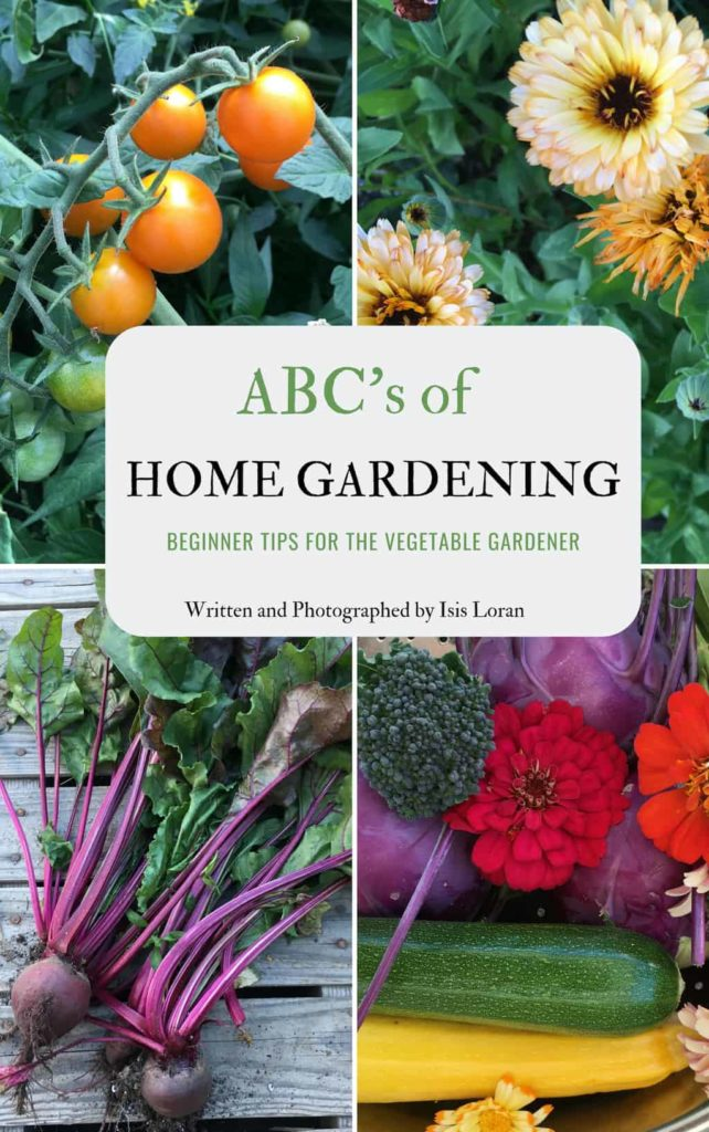 Beginner Tips for the Vegetable Gardener