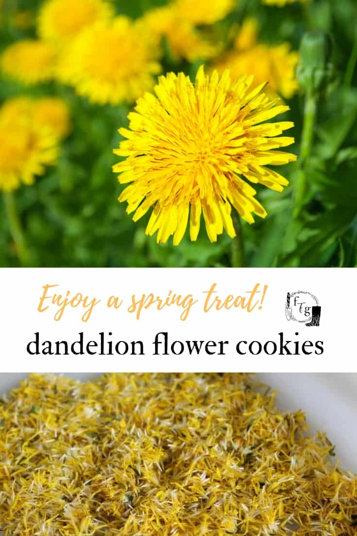 Make dandelion cookies with dandelion flowers #dandelions #herbs #herbalism #baking #cookies #springeating #springrecipes #dandelions #dandelionflowers