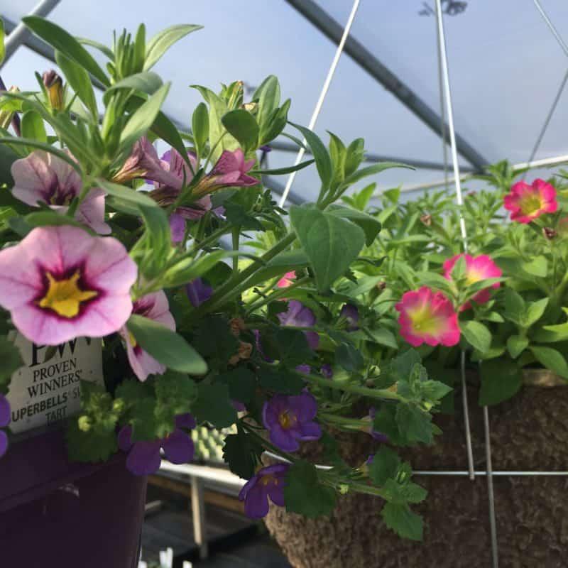 Free Flower Garden Planner Planning Makes Everything Family