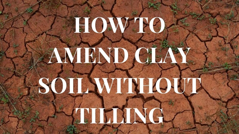 How to Amend Clay Soil Without Tilling
