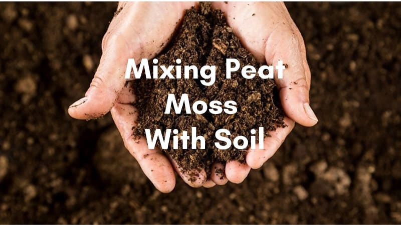 Mixing Peat Moss With Soil