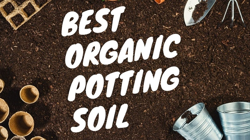 best organic potting soil