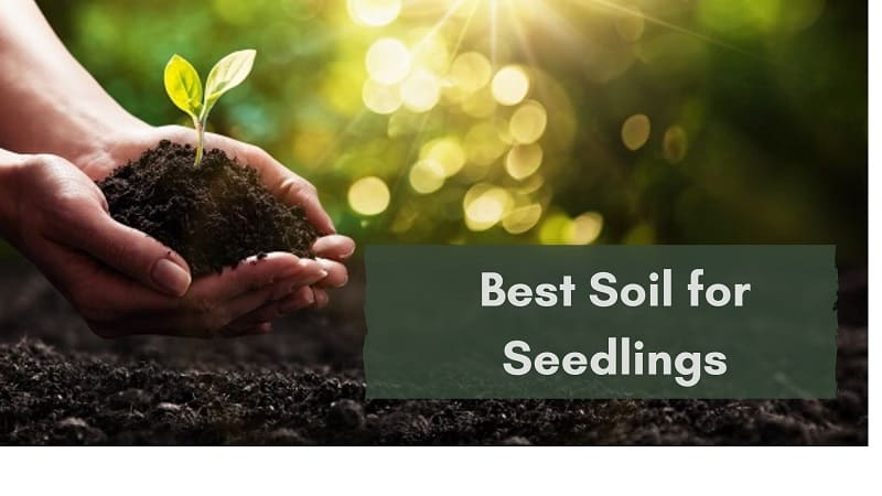 best soil for seedlings