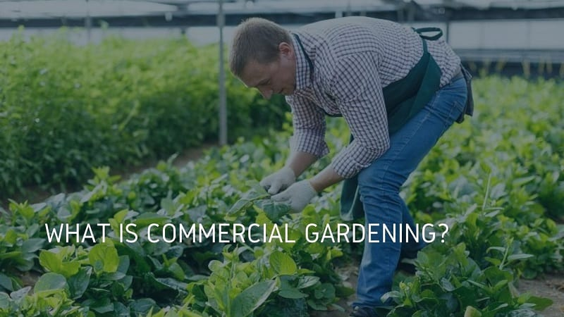 what is commercial gardening