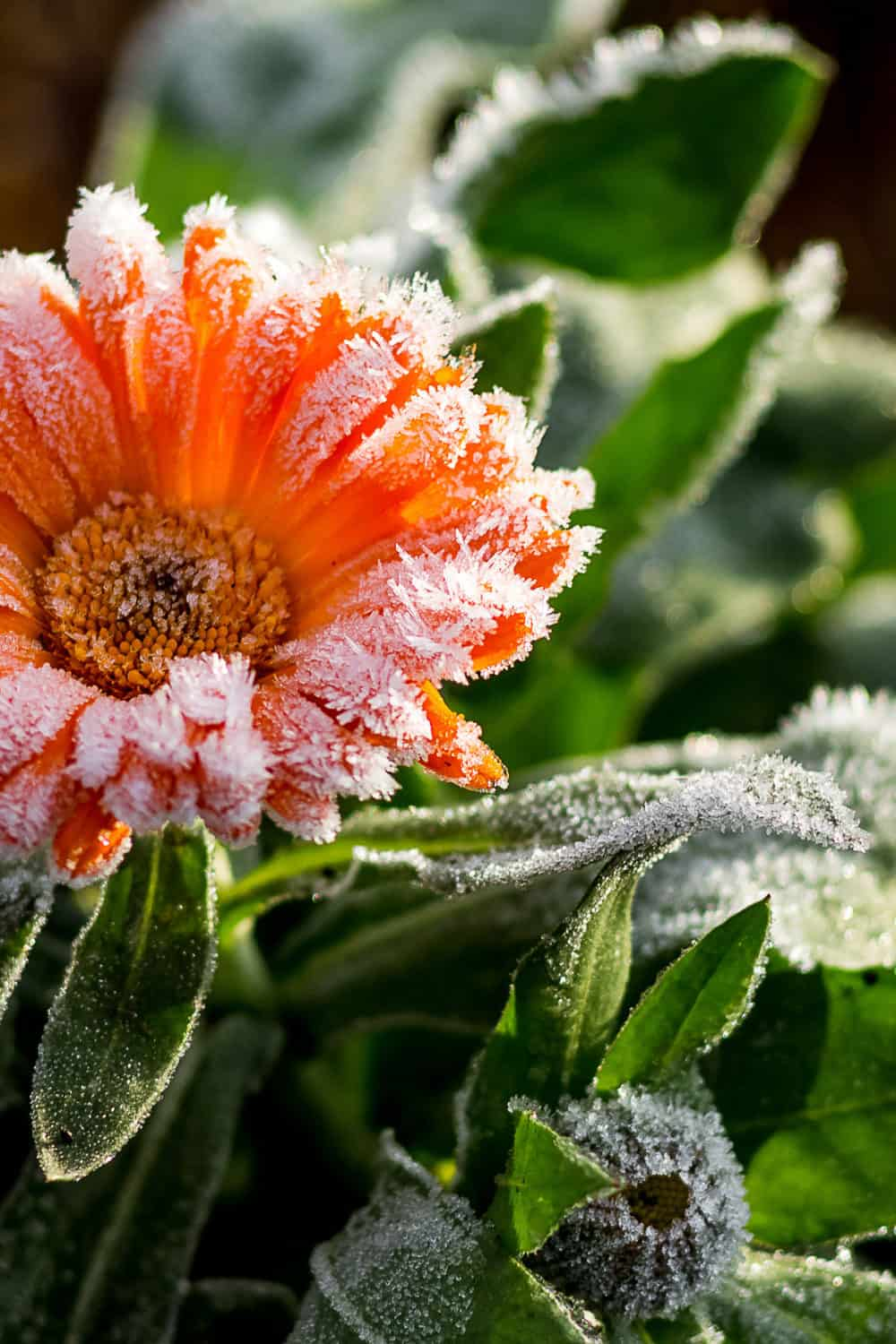 how cold is too cold for flowers to be outside