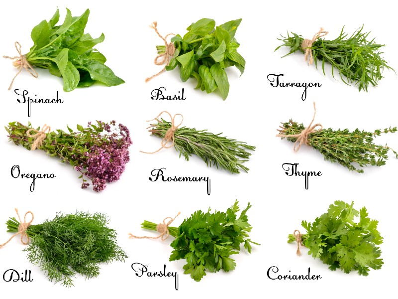 Herbs for Social Anxiety